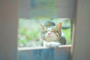 窓から猫_R