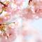 spring_R